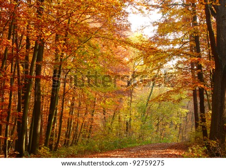Autumn in wood of Germany, east part.