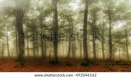 Autumn is coming, misty forest in a typical autumn day