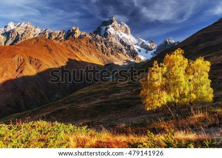 Autumn landscape and snowy mountain peaks. Birch forest in sunlight. Main Caucasian Ridge. Mountain View from Mount Ushba Mheyer, Georgia. Europe.