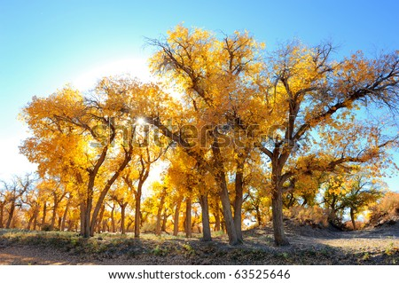 Autumn landscape at the morning park - stock photo