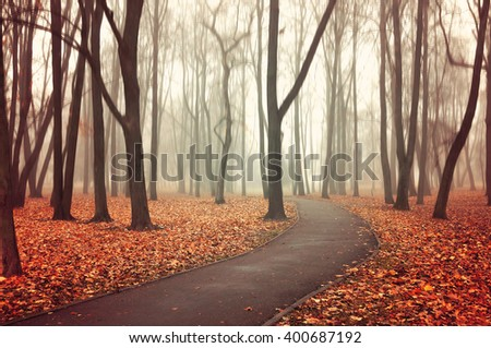 Autumn landscape. Autumn natural view. Lonely walkway in the autumn deserted park in the autumn fog - picturesque autumn landscape, view of autumn nature in foggy autumn weather - stock photo
