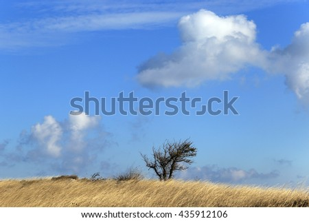 autumn landscape beautiful  light clouds in the blue sky over a field of dry grass