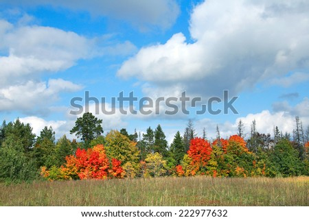 autumn landscape beauty of the deciduous forest with colorful leaves on a sunny day