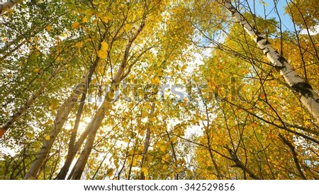 Autumn landscape. Birch tree forest - stock photo