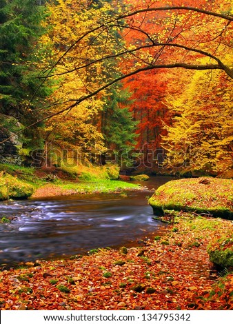 Autumn landscape, colorful leaves on trees, morning at river after rainy night. Colorful leaves. Autumn stream. Forest river. November scene.Fall morning river. Colors of river. Nature in autumn. - stock photo