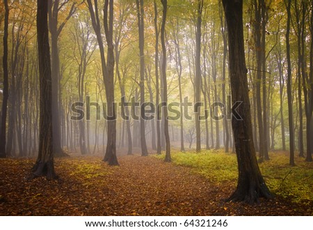 autumn landscape from a forest with colorful leafs and fog - stock photo