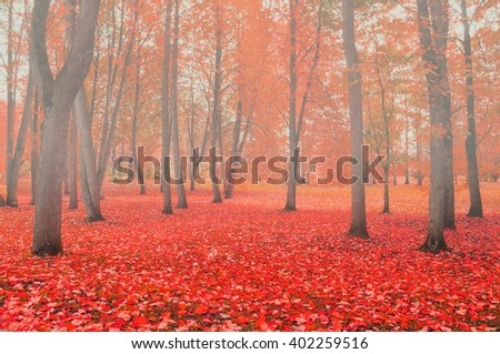 Autumn landscape in foggy weather - city park with bare autumn trees and colored fallen red leaves on the foreground in cloudy day. Soft focus and creative filter applied  - stock photo