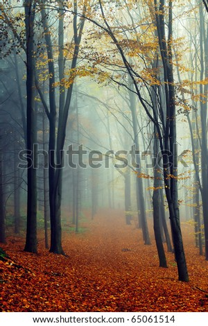 Autumn landscape in foggy wood with a track - stock photo