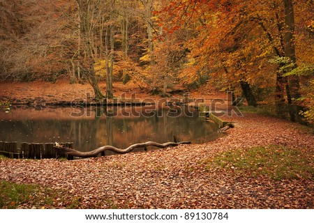 Autumn landscape in forest woods with a lake, lots of red and orange leaves on the ground. Taken at Waggoners Wells in Grayshott, Hampshire, England. - stock photo