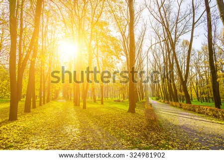 Autumn Landscape in Park with Two Roads Covered Fallen Leaves and Sun in Branches of Trees - stock photo