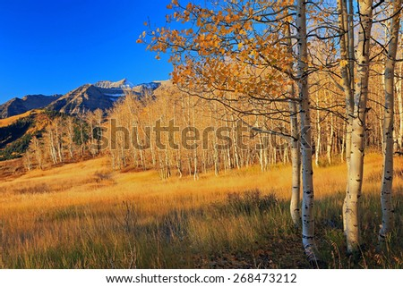 Autumn landscape in the Utah mountains, USA.