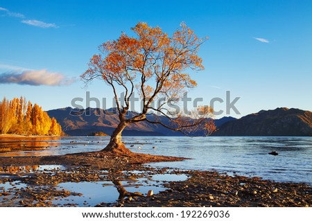 Autumn landscape, lake Wanaka, New Zealand - stock photo