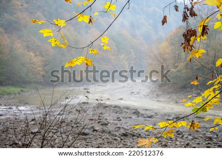 Autumn landscape mountain river in the forest
