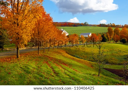 Autumn landscape of green rolling hills covered with bright colorful orange and red trees and leaves along a country road. Blue sky with puffy white clouds.