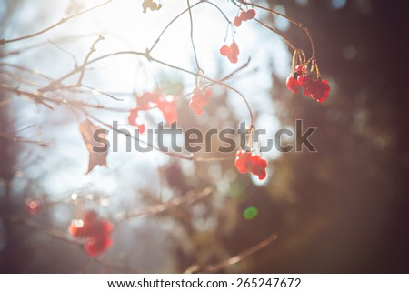 Autumn landscape on blurred background - stock photo