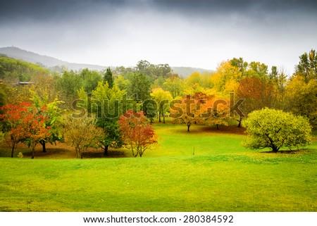 Autumn Landscape. Panorama of autumn trees in Australia - stock photo