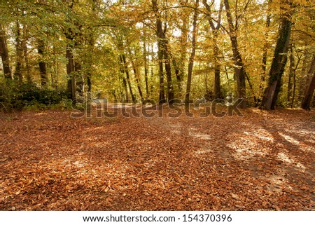 Autumn Landscape. Park in Autumn.