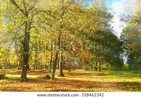 Autumn landscape - sunset in the autumn park , bright rays of sun breaking through the tree branches