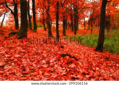 Autumn landscape. View of autumn nature with fallen autumn leaves. Oak autumn woodland with carpet of autumn red leaves in cloudy autumn weather. Soft focus applied. Foggy autumn landscape - stock photo