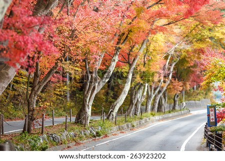 Autumn landscape with a beautiful road with colored trees, Japan - stock photo