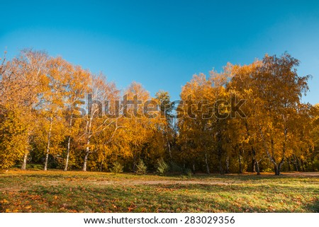 Autumn landscape with colored trees and lens flare - stock photo