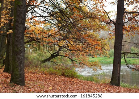 Autumn landscape with colorful chestnut and maple leaves. - stock photo