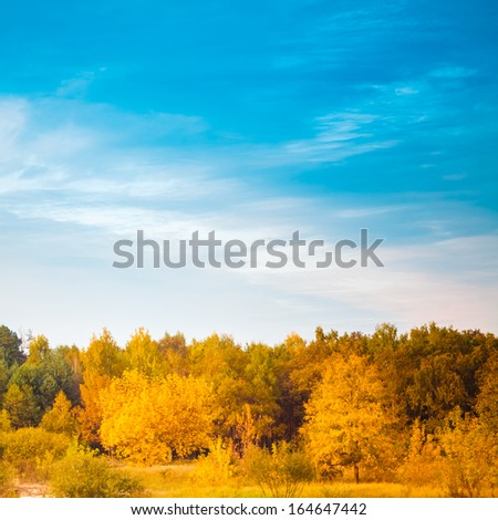 Autumn landscape with colorful forest and blue sky background. Russian nature - stock photo