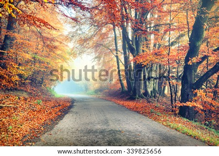 Autumn landscape with country road in orange tone. Nature background - stock photo