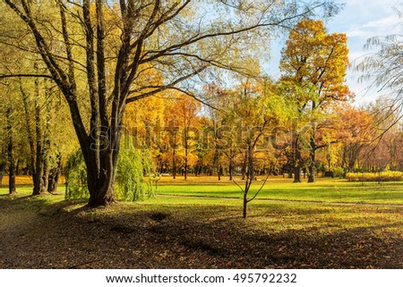 autumn landscape with deciduous trees in the park