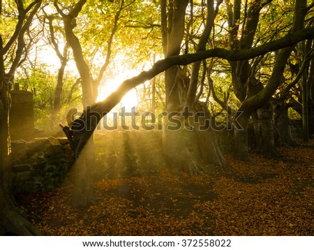 Autumn Landscape with Dramatic Lighting in Aberdeen, Scotland UK - stock photo