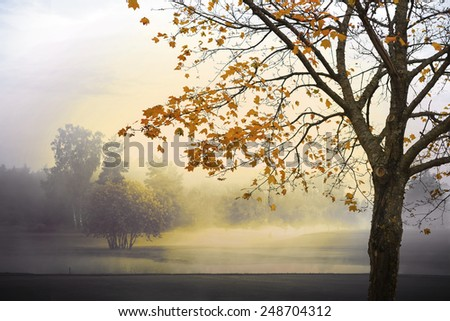 Autumn landscape with fog and sunshine, maple tree in foreground - stock photo