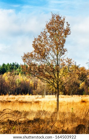 Autumn landscape with forest and lonely tree on swamp in the foreground