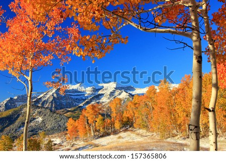 Autumn landscape with golden aspens and fresh snow in the Utah mountains, USA. - stock photo