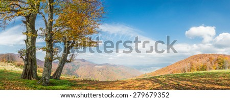 Autumn landscape with golden tree in mountain, panorama - stock photo