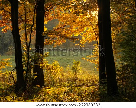 autumn landscape with lights in branches - stock photo