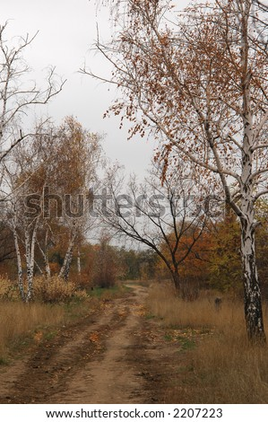 Autumn landscape with road between the trees