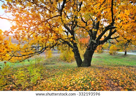 Autumn landscape with tree