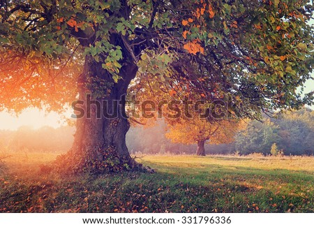 Autumn landscape with tree in sunlight - stock photo