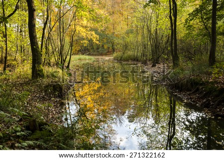 Autumn Landscape With Trees And River In North Poland/ Autumn Reflections