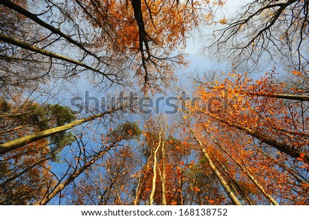 Autumn landscape with trees in the forest   - stock photo
