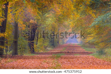 Autumn lane with Beech trees (Fagus sylvatica) in bright orange yellow and brown colors