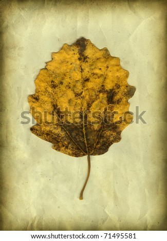 Autumn Leaf - stock photo