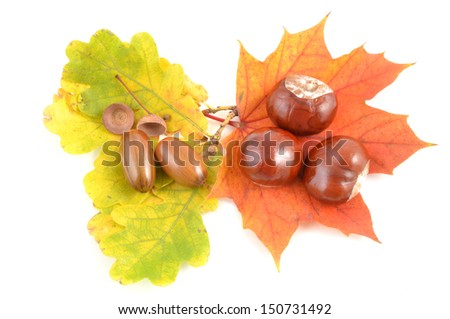 autumn leaf, acorn and chestnuts  isolated on white background
