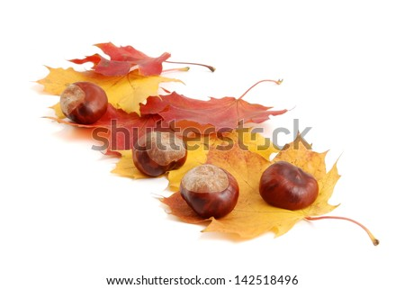 autumn leaf and chestnuts isolated on white background