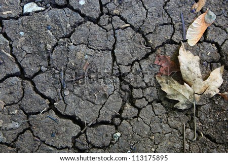 Autumn leaf and cracks in the ground