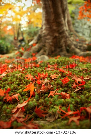 Autumn leaf and moss shoot in 2012 in Kyoto Japan - stock photo