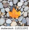 autumn leaf background sea stones - stock photo