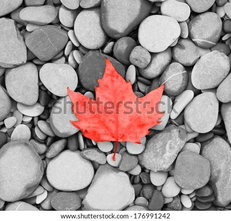 autumn leaf background sea stones  black and white  photo Canada flag - stock photo