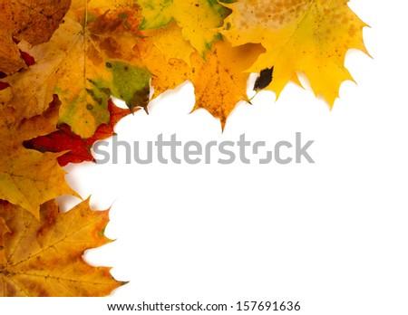 autumn leaf border - stock photo