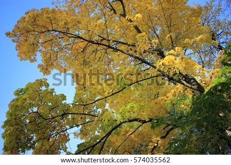 Autumn Leaf Colors Nature Wallpaper Foliage September Contrast Beautiful Scene